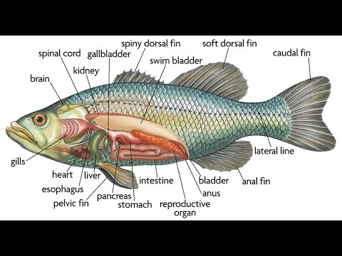 Anatomy of a trout stream