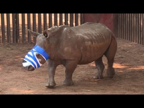 Mutilated rhino in S.Africa on long road to recovery