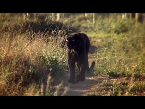 The incredible story of how leopard Diabolo became Spirit - Anna Breytenbach,