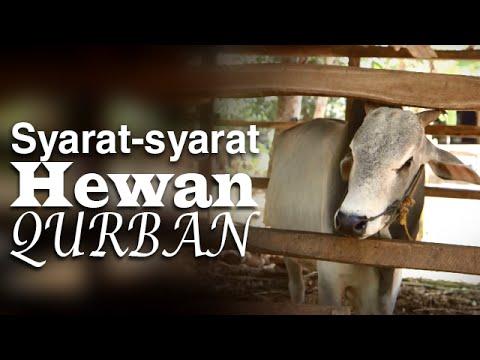 Serial Fikih Islam 2 - Episode 12: Syarat-Syarat Hewan Qurban - Ustadz Abduh Tuasikal