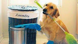 SMART PETS: CAT & DOG CUTE VIDEOS   Funny Pets Compilation