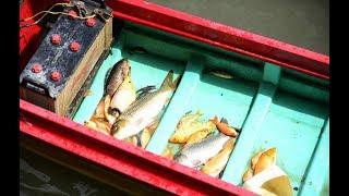 Cá chép chưa kịp đưa ông táo về trời đã bị vớt sạch