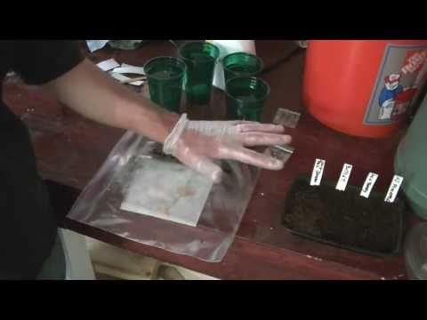 The two best way to plant Hot Pepper seeds for good germination