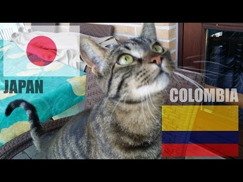 Japan vs Colombia - World Cup 2014 - Fat Cat Predictions