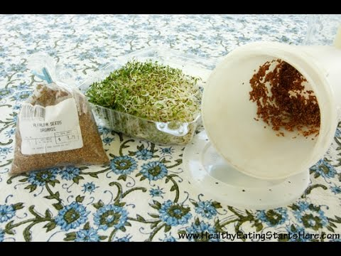 Growing Alfalfa Sprouts? Here's How To Get The Best Results