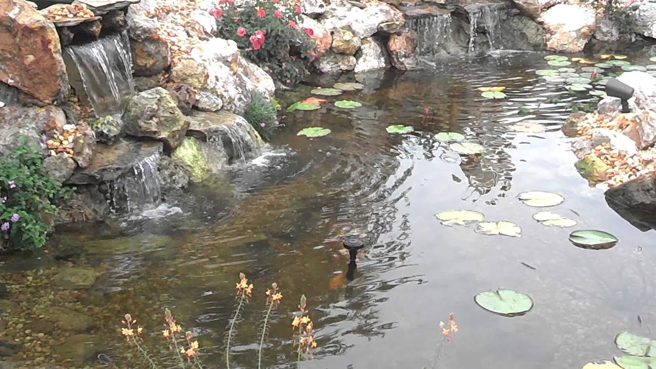Water garden pond and waterfall ecosystem pond water for Garden pond ecosystem
