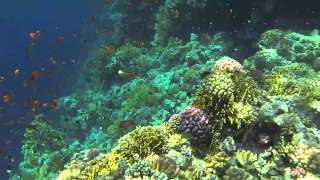 Sharm el-Sheikh - Tiran Island (snorkeling)