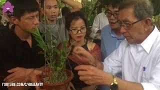 Hoalantv: Coi Chừng Vỏ Lạc Thành Thứ Giết Chết Hoa Lan