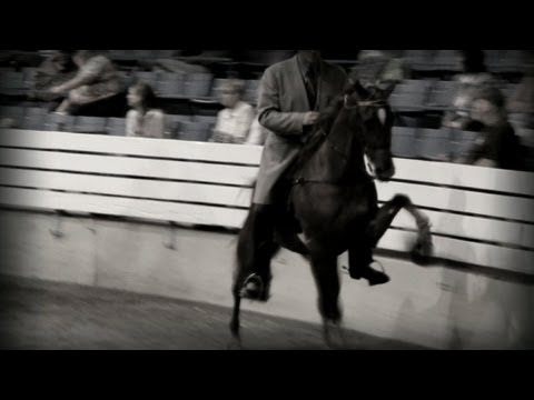 Tennessee Walking Horse Investigation Exposes Cruelty