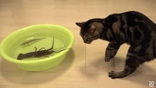 Кот юзает рака. Рак - против.