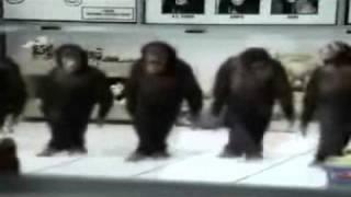 download lagu Majmuni Pravo Vlasko Kolo gratis