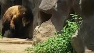 Que oso tan grande, pero esta lindo...