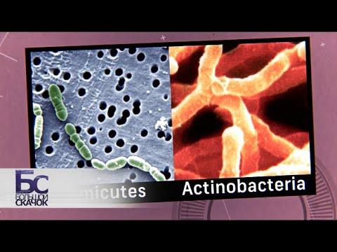 Микробиота | Большой скачок