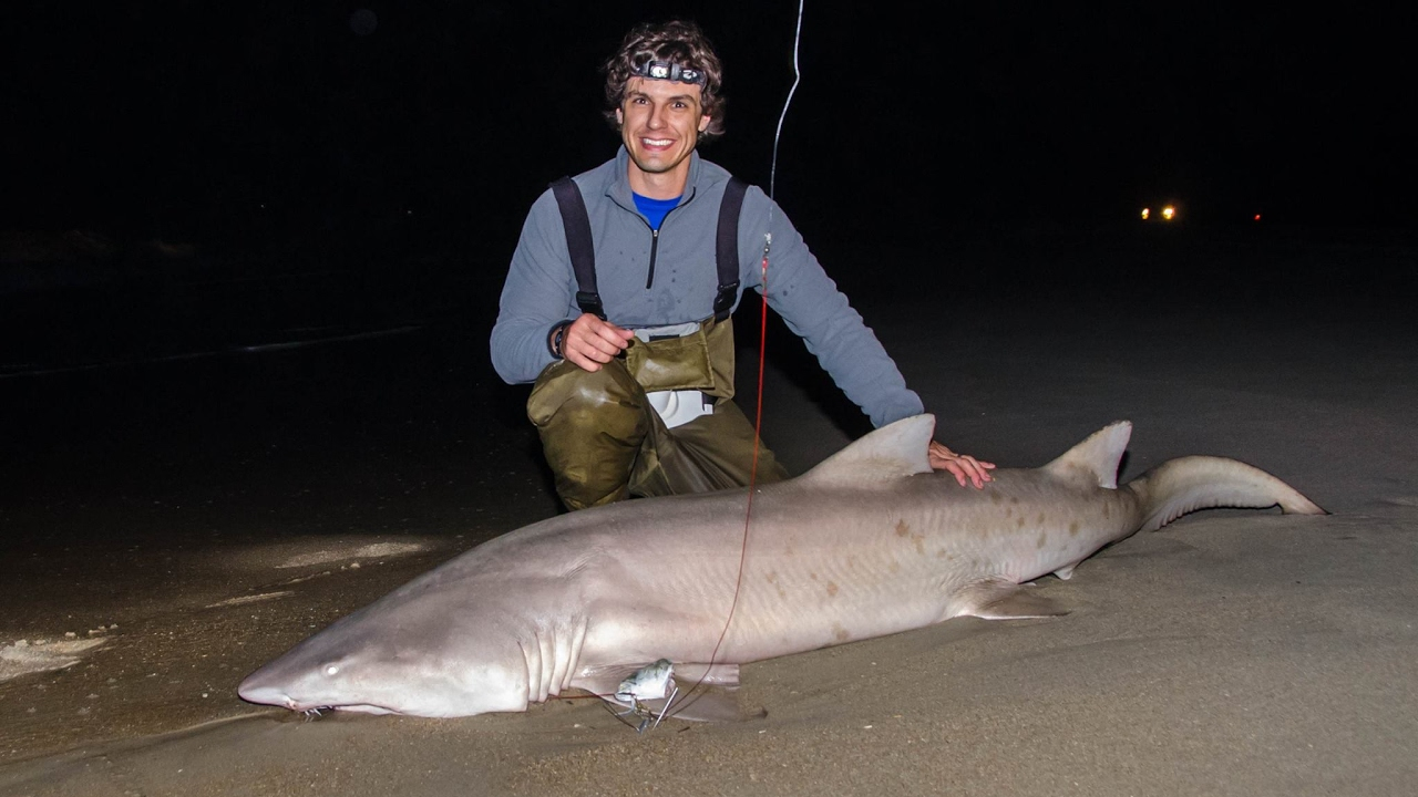 Outer banks shark fishing from the surf davis island for Cape lookout fishing report