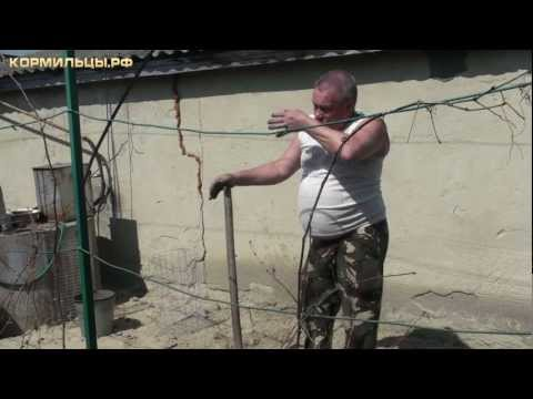 Видео как выращивать виноград