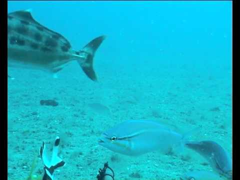 Whiptails, red emperor and trevally