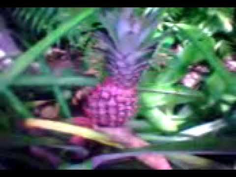 AGRO TOURISM IN BALI (INDAH CREATION)