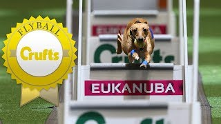 Meet Hustle and Shoots - The Fastest Dogs in Flyball!