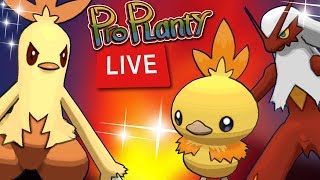 torchic community day live shiny hunt pokemon go