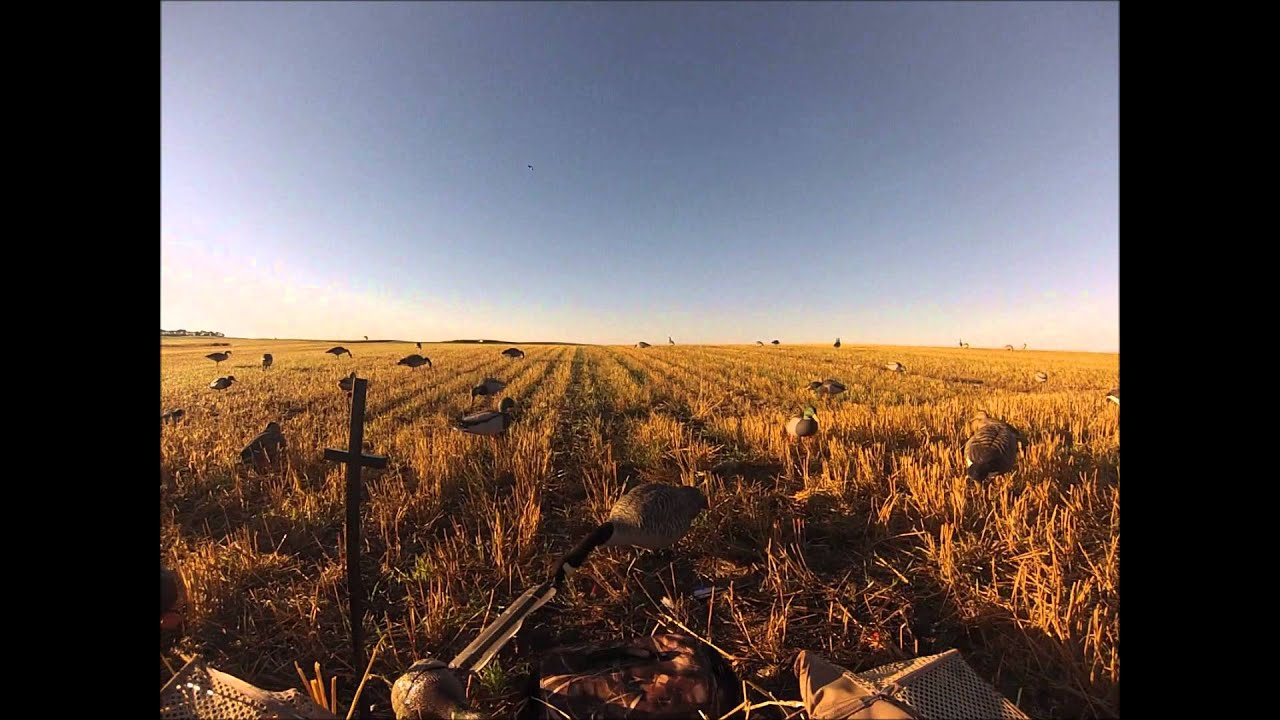 2013 north dakota waterfowl opener youtube for North dakota fishing license
