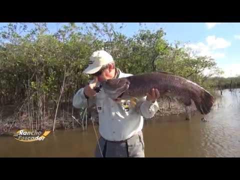 A Melhor Pescaria De Trairões E Tucunarés
