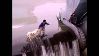 Amazing Frightened Dog Rescue
