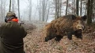 Best of driven wild boar hunting   Wild boar fever at its best   Hunting HOG