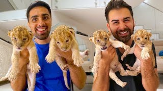 MY NEW BABY LIONS !!!