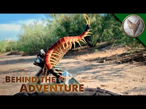 A Centipede's Venomous Bite!