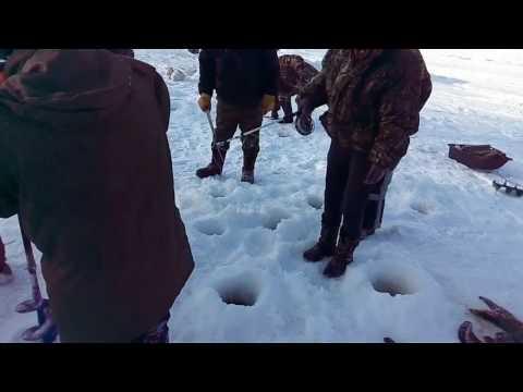зимовальные ямы сомов видео