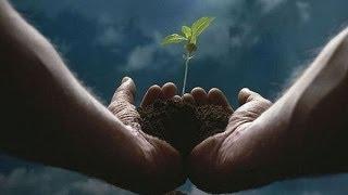 5 Plantas Medicinales Contra el Cáncer 19 5 14