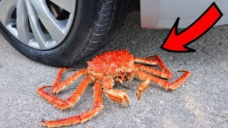 EXPERIMENT: CAR vs KING CRAB