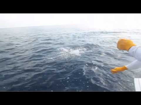 CatchStat | Offshore World Championship Fish #18280