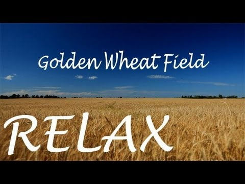 10minutes2relax - Golden Wheat Field Creative Commons Attribution License
