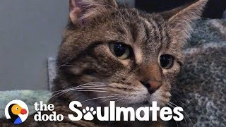 A Stray Sick Kitten Walked Into Family's Life | The Dodo Soulmates