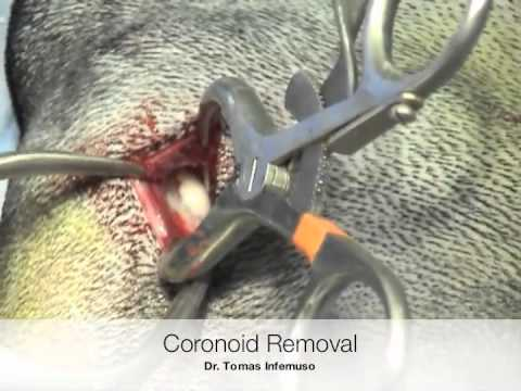 Canine Arthroscopy