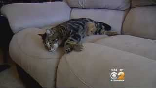 Cat Saves Boy From Dog Attack In California