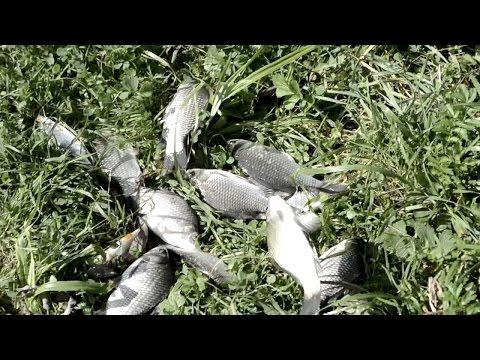 рыбалка в тербунском районе липецкой области