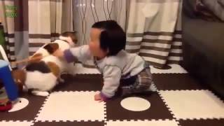 funny baby videos and dog