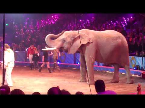 Festival International du cirque de Monte Carlo 2010  Les éléphants