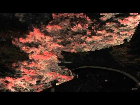 下呂市 「温泉寺周辺」 ~紅葉ライトアップ~
