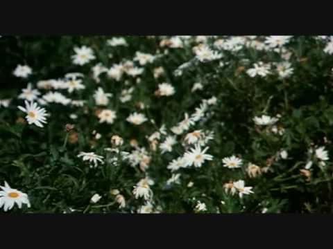 Harold And Maude - Flower Scene