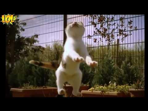 ЛУЧШИЕ ПРИКОЛЫ С КОТАМИ ИЮЛЬ 2017 BEST Jokes 2017 Funny Cats Fail #43