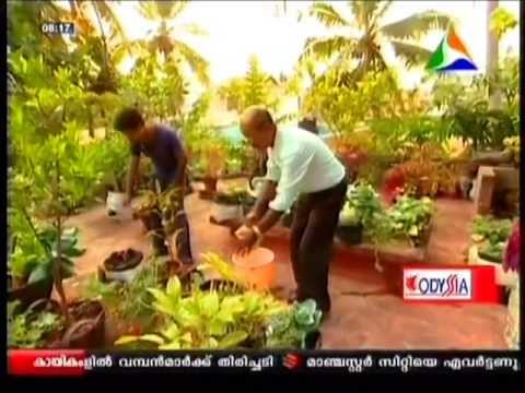 Easy way to grow fruits vegetables medicinal plants on for Terrace vegetable garden ideas in tamil