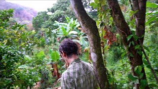 Rare Tropical Fruit Collector HAS IT ALL: Trekking Paul Zink's 7-Year-Old Food Forest