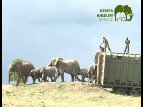 Elephant Relocation in Kenya with KWS
