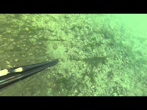 Spearfishing NJ - Flounder