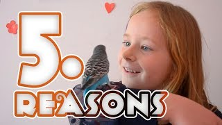 Top 5 Reasons to get a pet bird | Budgies are awesome!