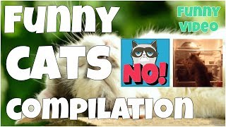 Funny cats compilation 🔸7 second of happiness FUNNY Video 😂 #2