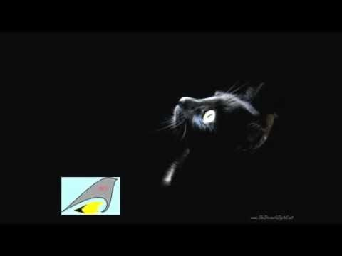 DJ NILDO MIX 2012 ((HD)).flv
